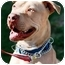 Photo 1 - American Staffordshire Terrier Dog for adoption in West Los Angeles, California - Eben