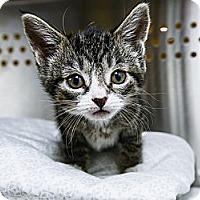 Adopt A Pet :: Henya - New York, NY