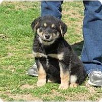 Adopt A Pet :: Skoda - Westbrook, CT