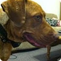 Adopt A Pet :: Mandy - Lewisville, IN