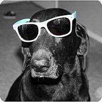 Adopt A Pet :: EMMA - Gilbert, AZ