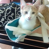 Adopt A Pet :: Jim Bob - Fairborn, OH