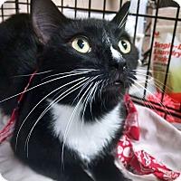 Adopt A Pet :: Tux - Ocean City, NJ