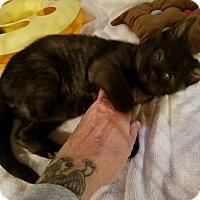 Adopt A Pet :: Austin - Geneseo, IL