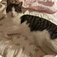 Adopt A Pet :: Tripp - Farmington, AR