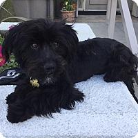Adopt A Pet :: ZION - Los Angeles, CA