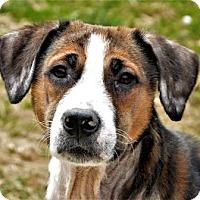 Adopt A Pet :: Maggie - Lincolnton, NC