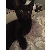 Adopt A Pet :: Marge 17-0055 - Richardson, TX
