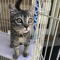 Adopt A Pet :: Miney - Sonoma, CA