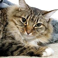 Adopt A Pet :: Zara - Portland, OR