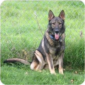 German Shepherd Dog Mix Dog for adoption in Muldrow, Oklahoma - Kristina