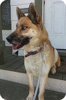 German Shepherd Dog/Husky Mix Dog for adoption in Chicago, Illinois - Jemma (ADOPTED!)