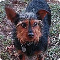 Adopt A Pet :: RYAN - Salt Lake City, UT