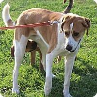 Adopt A Pet :: Tippy - Minneapolis, MN