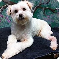 Adopt A Pet :: Fuzzy - Goleta, CA