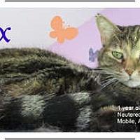 Adopt A Pet :: Dex - Mobile, AL