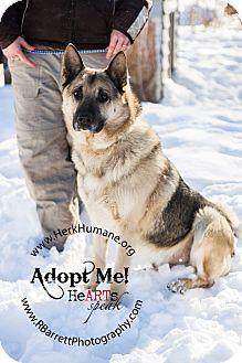 German Shepherd Dog Mix Dog for adoption in Mohawk, New York - Fonzi