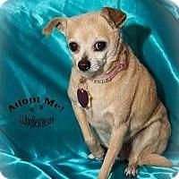 Adopt A Pet :: Holly - Shawnee Mission, KS