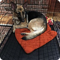 Adopt A Pet :: Starlet - Houston, TX