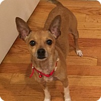 Adopt A Pet :: Poncho - Chicago, IL