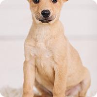 Adopt A Pet :: Dove - Portland, OR