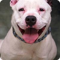 Adopt A Pet :: Cocoa - Newnan City, GA