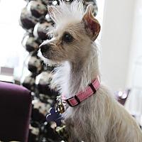 Adopt A Pet :: Maui - Los Angeles, CA