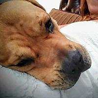 Adopt A Pet :: Hera - Walton County, GA