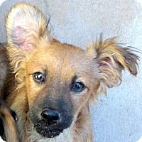 Adopt A Pet :: Baby Whiskey - Oakley, CA
