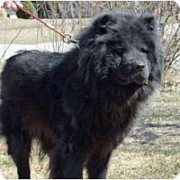 Adopt A Pet :: Ebony - Holland, MI