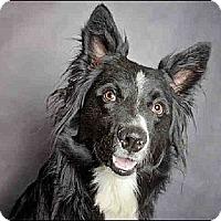 Adopt A Pet :: River - Salt Lake City, UT