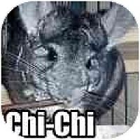 Adopt A Pet :: Chi-Chi - Virginia Beach, VA