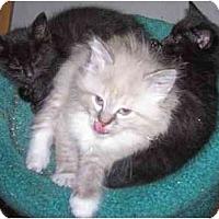 Adopt A Pet :: Triplets!!! - cincinnati, OH