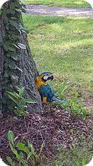Macaw for adoption in staten Island, New York - sky