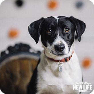 Pointer/Border Collie Mix Dog for adoption in Portland, Oregon - Pepper