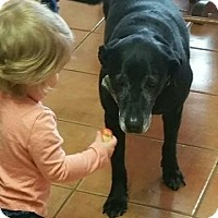Adopt A Pet :: Marge - New Canaan, CT