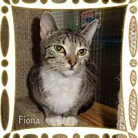 Adopt A Pet :: Fiona - Ozark, AL