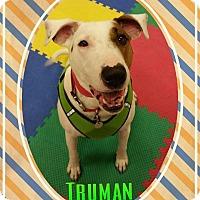 Adopt A Pet :: Truman (& Annie) - Florence, KY