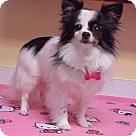 Adopt A Pet :: Missy - 5 lbs.