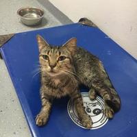 Adopt A Pet :: Skylar - Brooksville, FL