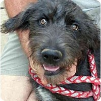 Adopt A Pet :: Raven - Harrisburg, PA