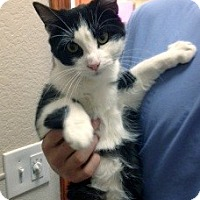 Adopt A Pet :: Tom - Denton, TX