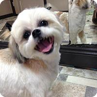 Adopt A Pet :: Poppi - Conway, AR