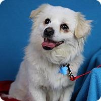Adopt A Pet :: Benji - Minneapolis, MN