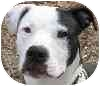 Terrier (Unknown Type, Medium) Mix Puppy for adoption in Eatontown, New Jersey - Moo-Man