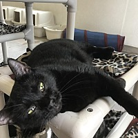 Adopt A Pet :: Cher - Boca Raton, FL
