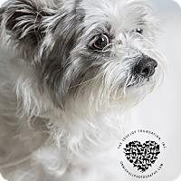 Adopt A Pet :: Emma - Inglewood, CA