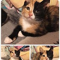 Adopt A Pet :: Fanta - Hampton, VA