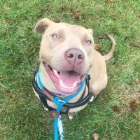 Adopt A Pet :: Taylor - West Allis, WI
