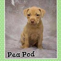 Adopt A Pet :: PeaPod - Portage, IN